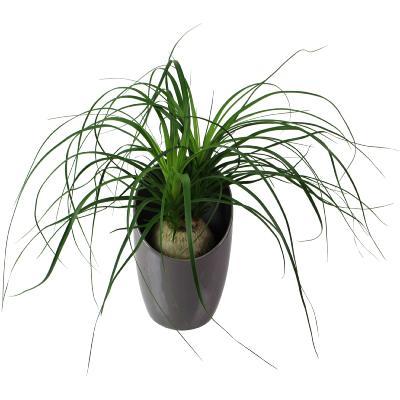 La Plante Verte Of La Fontaine Fleurie Livraison Plante Verte Compi Gne