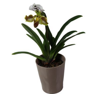 la fontaine fleurie livraison orchid e sabot de venus. Black Bedroom Furniture Sets. Home Design Ideas