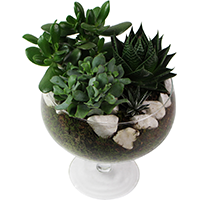 COUPE DE PLANTES GRASSES VARIEES