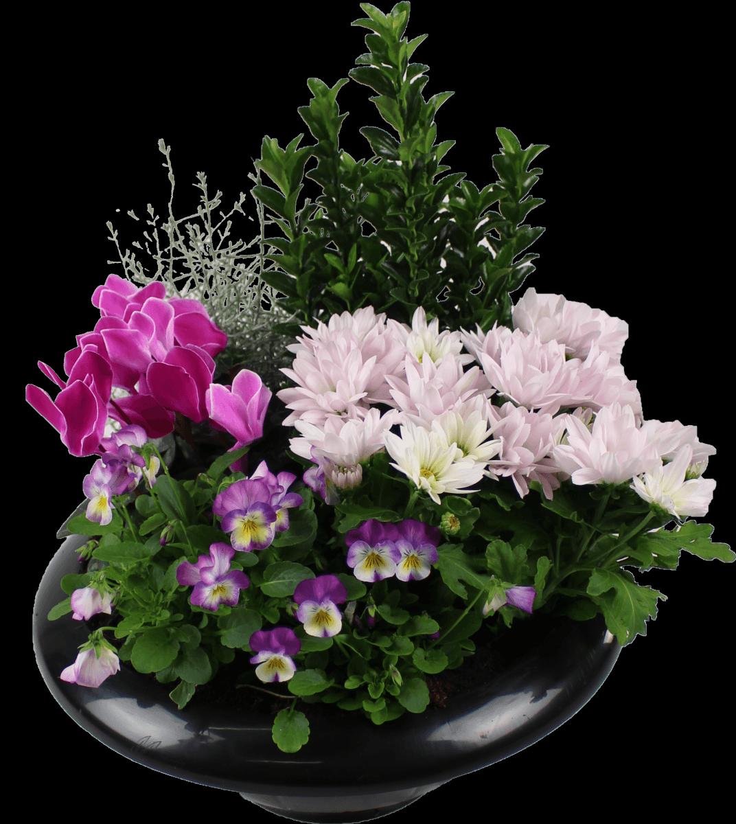la fontaine fleurie livraison coupes de fleurs vari es compi gne. Black Bedroom Furniture Sets. Home Design Ideas