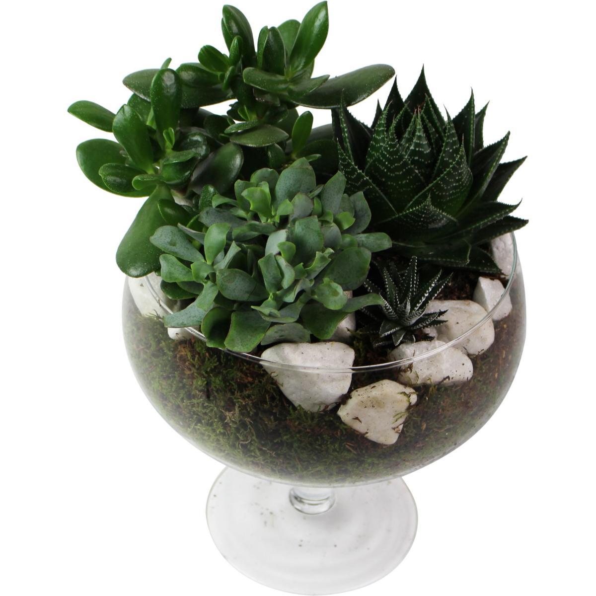 plantes grasses photos kr39 humatraffin. Black Bedroom Furniture Sets. Home Design Ideas